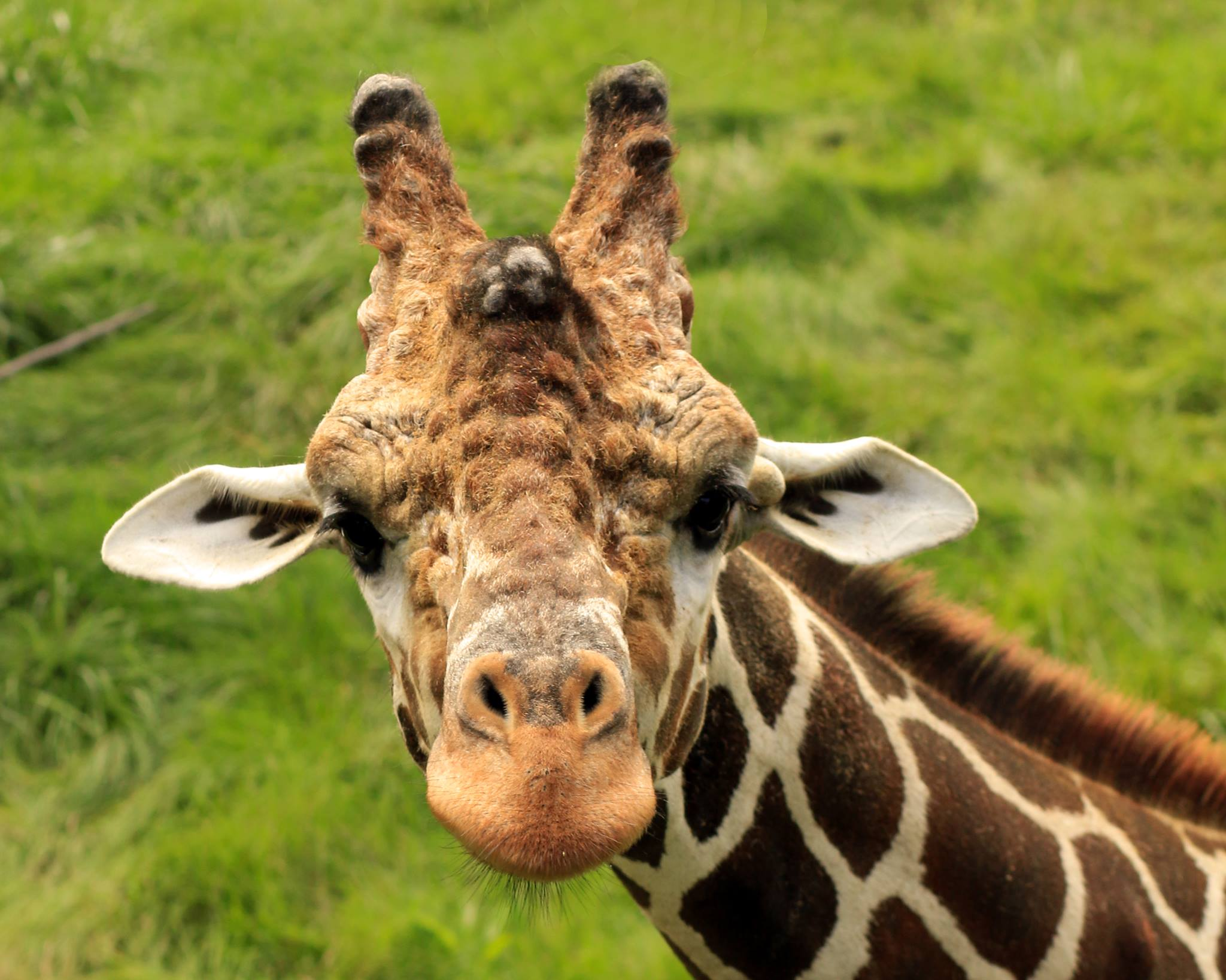 Click here to watch a video about the Giraffes at Peoria Zoo!